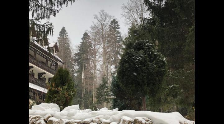 Regia Națională a Pădurilor – Romsilva a alocat, în 2018, un buget de 167,4 milioane de lei pentru regenerarea pădurilor