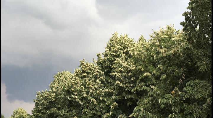 ANM: ATENȚIONARE generală cod galben de descărcări electrice, intensificări ale vântului cu aspect de vijelie și grindina