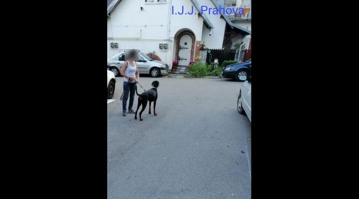 Femeie muscata de un Doberman la Busteni. Stapana animalului nu a putut sa il opreasca