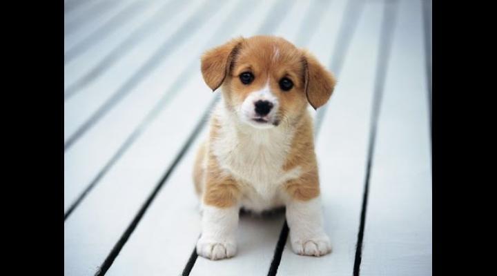Expoziție de câini și târg de adopții, la Bucov