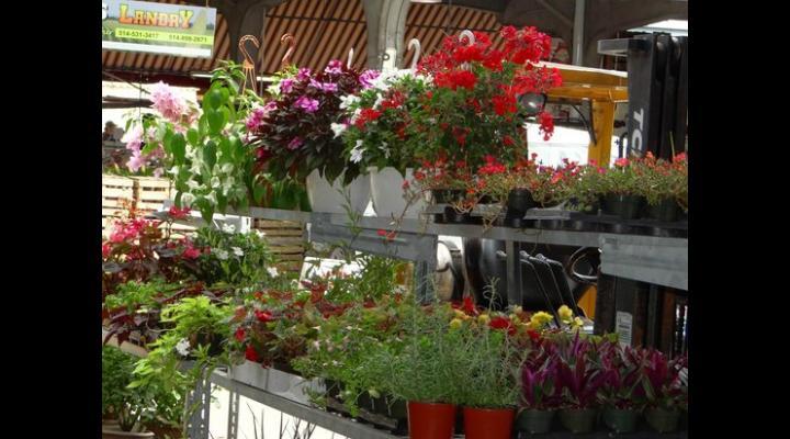Florărese de la Halele Centrale din Ploiești, amendate de polițiști