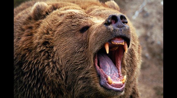 """Grațiela Gavrilescu: """"Primim zilnic la minister multe sesizări de la populația care a suferit daune produse de ursul brun. Este clar că avem de-a face cu un vid legislativ, care ar putea pune în pericol populația."""""""