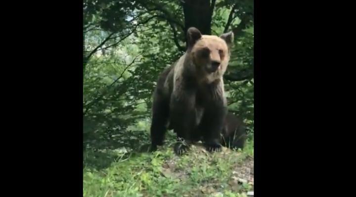 Patru turiști au întâlnit un urs în Azuga/Ce au făcut