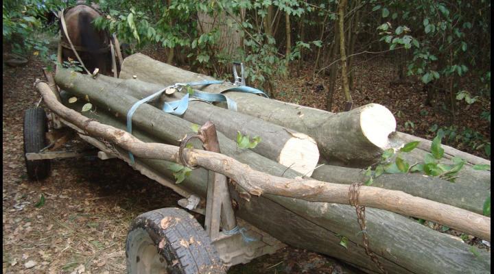 FOTO Furt de lemne din pădurea Recea, Plopeni. Autorii au fugit