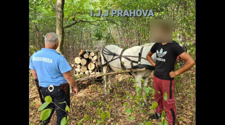 Noi tăieri de arbori în pădurea Recea din zona Plopeni