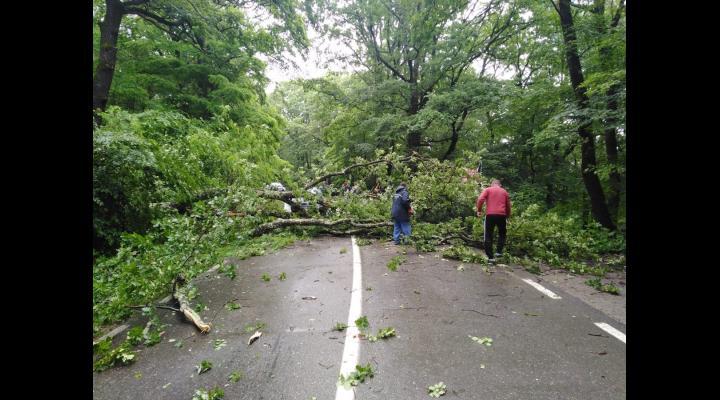 Mai multi arbori, cazuti pe drumurile din Prahova/La Sinaia, drum inundat