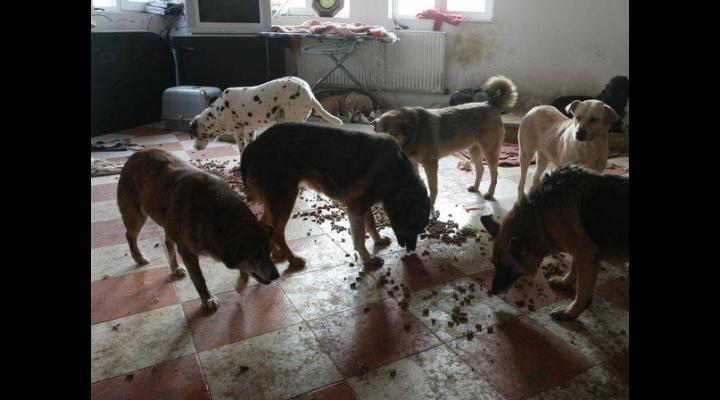 Ce au descoperit oamenii legii într-un apartament din Ploiești