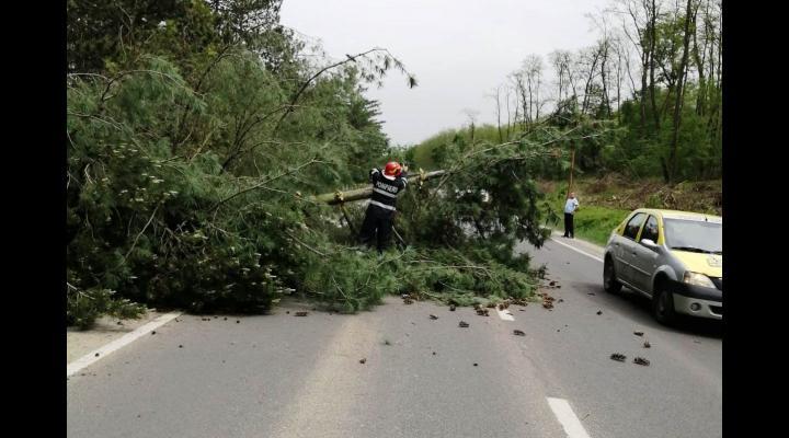 Intervenții ISU în Ploiești, în urma furtunii