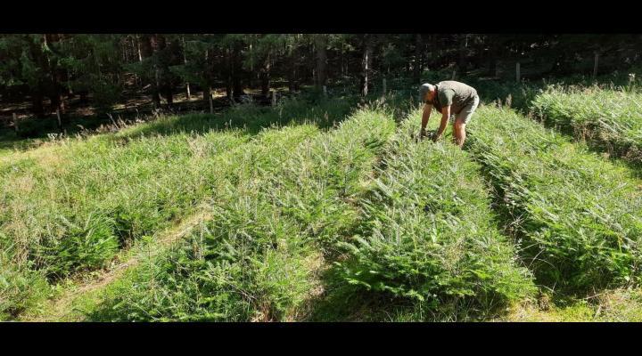 Peste 700.000 de puieti forestieri a pregatit Directia Silvica Prahova pentru campaniile urmatoare de impadurire
