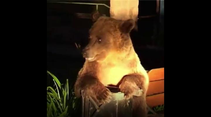 """Urșii din Prahova, în atenția celor de la BBC. Jurnaliștii britanici au postat un clip video cu titlul: """"Urşi înfometaţi caută mâncare într-un oraş din România"""" (VIDEO)"""