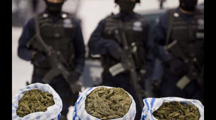 Polițiștii din Ploiești alături de cei din Buzău au efectuat percheziții la locuințele unor traficanți de droguri