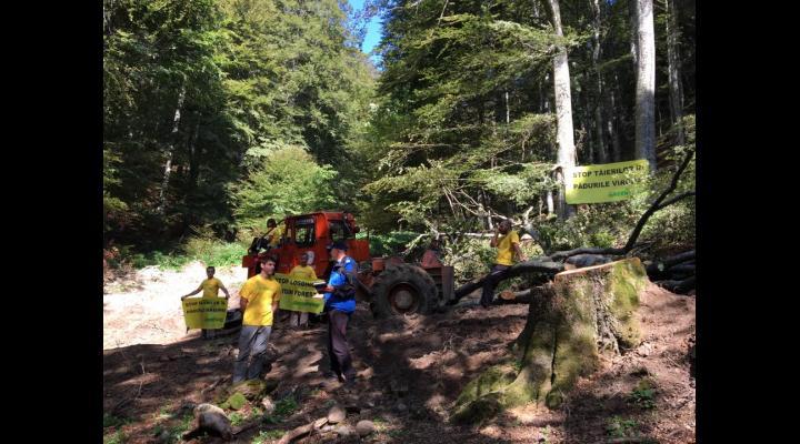 Activiștii Greenpeace vor să blocheze o exploatare forestieră ilegală, spun ei, în padurea cvasivirgină Bratocea situată la limita județelor Prahova și Brașov! (VIDEO)