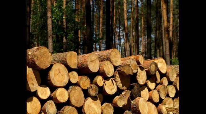 Un angajat al unei instituții cu atribuții în domeniul silvic din Vălenii de Munte a fost reținut de polițiști pentru delapidare
