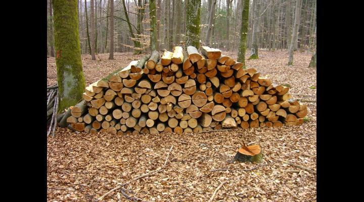 """Ministrul Apelor și Pădurilor, Doina Pană: """"Trebuie să ne asigurăm că tot lemnul de foc pe care pădurile statului îl produc merge direct la cetățenii care au reală nevoie"""""""