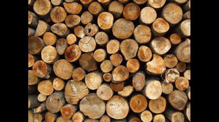 Hotii de lemne inventivi in fata organelor de control