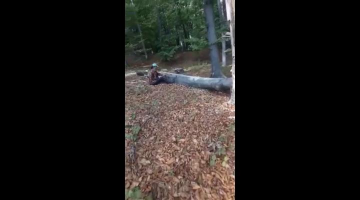 """Un prahovean, """"deranjat"""" de jandarmi in timp ce taia arbori"""