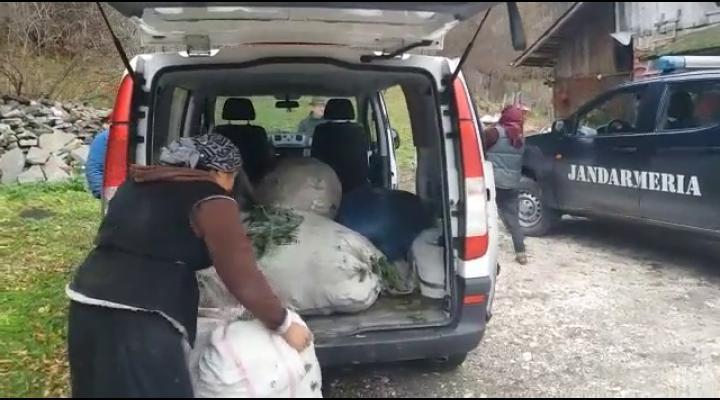 Au început furturile de sezon! Mai multe persoane prinse la furat de crengi de brad, în Sinaia - VIDEO