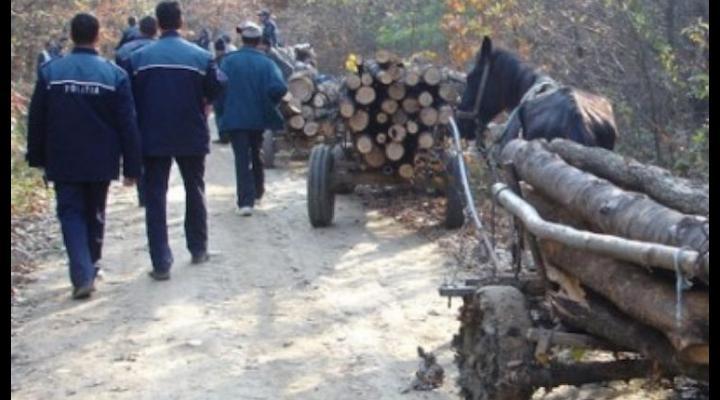 Perchezitii pe banda rulanta la hotii de lemne