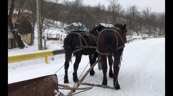 Deszapezire cu utilaje improvizate, intr-o comuna prahoveana. Cu doi cai, un plug si masina primarului se face partie pe drumurile localitatii – VIDEO