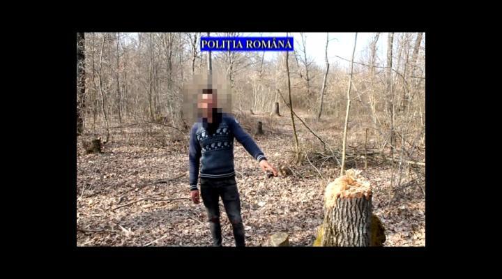 Trei barbati, sub control judiciar dupa ce au taiat arbori ilegal