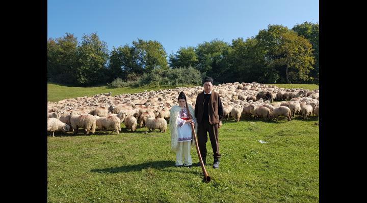Un depozit de lână va functiona in Prahova, la Boldesti Scaieni.  Ajutorul de minimis este 1 leu pentru fiecare kilogram de lână comercializată