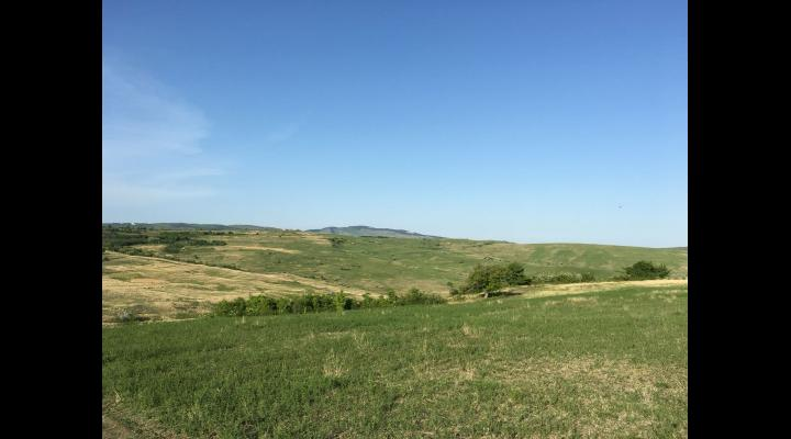 Regulament pentru pășunat, aprobat de Consiliul Local Rîfov