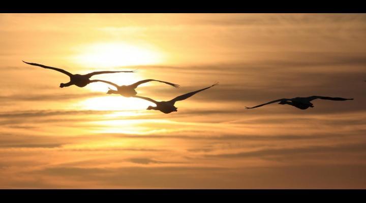 58 de specii de păsări, majoritatea migratoare, ocrotite prin lege in Prahova