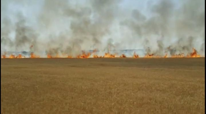 A început sezonul incendiilor de vegetație uscată! 4 ha de grâu au ars la Ariceștii Rahtivani – VIDEO