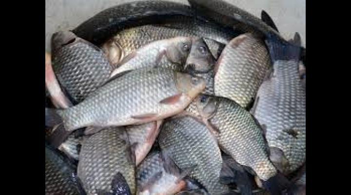 155 kg de pește confiscat de polițiștii din Tomșani