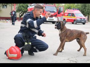 Un caine fara stapan si infometat, adoptat de pompierii prahoveni