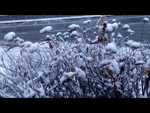 Ninge la munte! Imagini de la Predeal