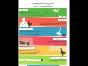 Plan de masuri impotriva pestei micilor rumegatoare si a gripei aviare, la Ploiesti