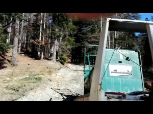 VIDEO Urs relocat, in Busteni