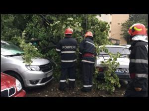 Efectele codului galben  de precipitații în Prahova: copaci căzuți, carosabil inundat și mașină blocată în apă