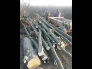 Hoti de lemne, prinsi de jandarmi