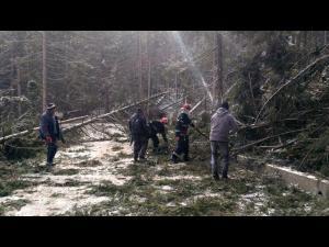 Pompierii prahoveni îndepărtează copacii căzuți pe drumul de acces către cabana Dichiu