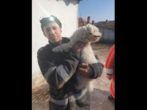 FOTO/VIDEO Brici, un cățeluș de 5 ani, salvat de pompierii prahoveni