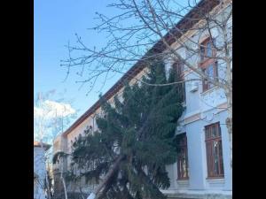 Un copac a cazut pe cladirea Colegiului National Mihai Viteazul din Ploiesti. O clasa a fost evacuata