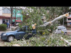 UPDATE Două persoane, asistate medical după ce un copac a căzut peste mașină, în Câmpina