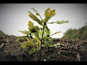 Romsilva a plantat peste 27 milioane de puieti forestieri in campania de impaduriri de primavara