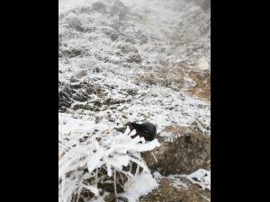 Un turist care cobora de la Vf. Omu a cazut in gol. Se pare ca este decedat!