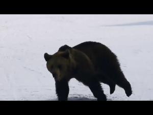 """Tanczos Barna, Ministrul Mediului, despre barbatul fugarit de urs pe partie: """"A facut un gest eroic aproape, poate si usor inconstient de consencintele care pot aparea"""""""