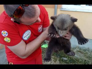 Pui de urs, salvat de echipa Salvamont Harghita