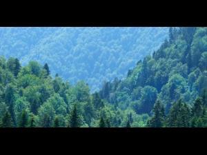 Ministerul vrea păduri păzite