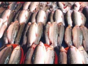 ANPC recomandă o atenție sporită la achiziționarea de pește, a preparatelor din pește preambalate și a conservelor din pește