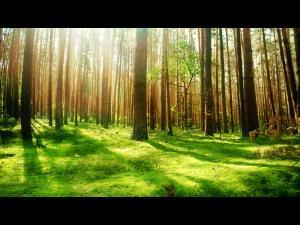 """Termenul pentru programul """"Prima împădurire"""" a fost prelungit"""