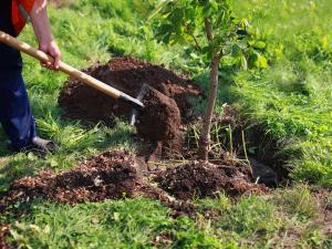 Acțiune de amploare, sâmbătă, la Lipănești. Localnicii și voluntarii sunt invitați să planteze 15.000 de copaci