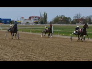 Premieră istorică duminică la Hipodromul de la Ploiești: curse de galop cu participare internațională