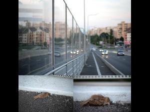 Ploiesteanul Sorin Petculescu trage un semnal de alarma. Zeci de pasari mor din cauza panourilor antizgomot