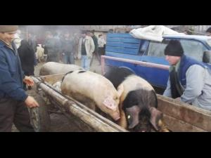 Targ de animale, inchis temporar in Prahova. S-a interzis si vanzarea animalelor vii in mai multe localitati